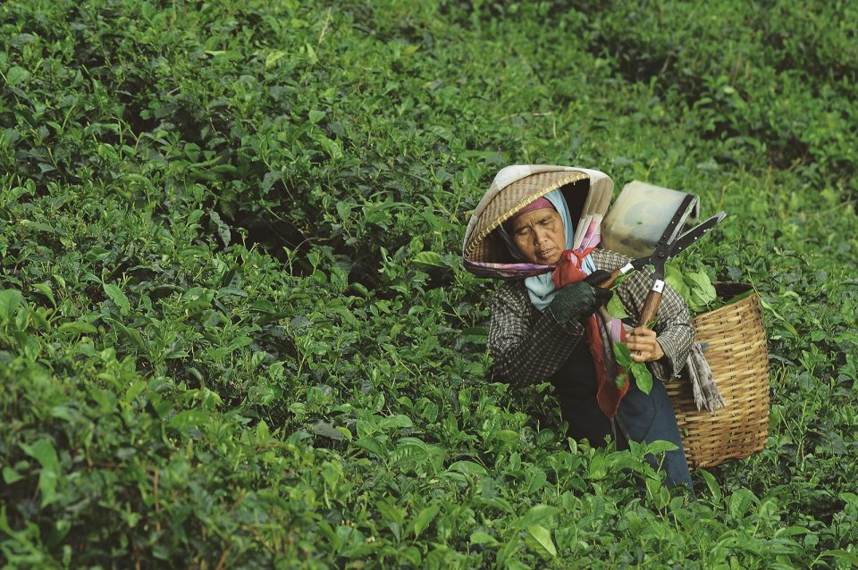 Small-scale farmers and certification: is there a business case?